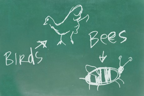 Birds the bees sex education
